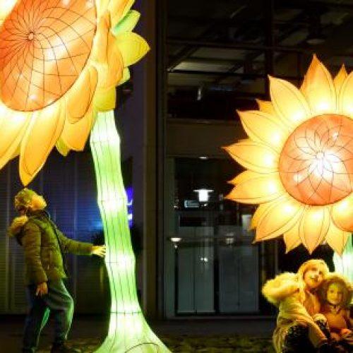 GLOW2019-21-Sunflowers-for-Van-Gogh-05-BvOF-LR_YXJfNjIweDMxMF9kXzFfanBnXy9fYXNzZXQvX3ByaXZhdGUvc25pcHBldC8yODUw_2f1bcec0.jpg