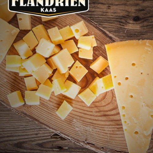flandrien-kaas-bedrijfsbezoek-violettacars-google-facebook